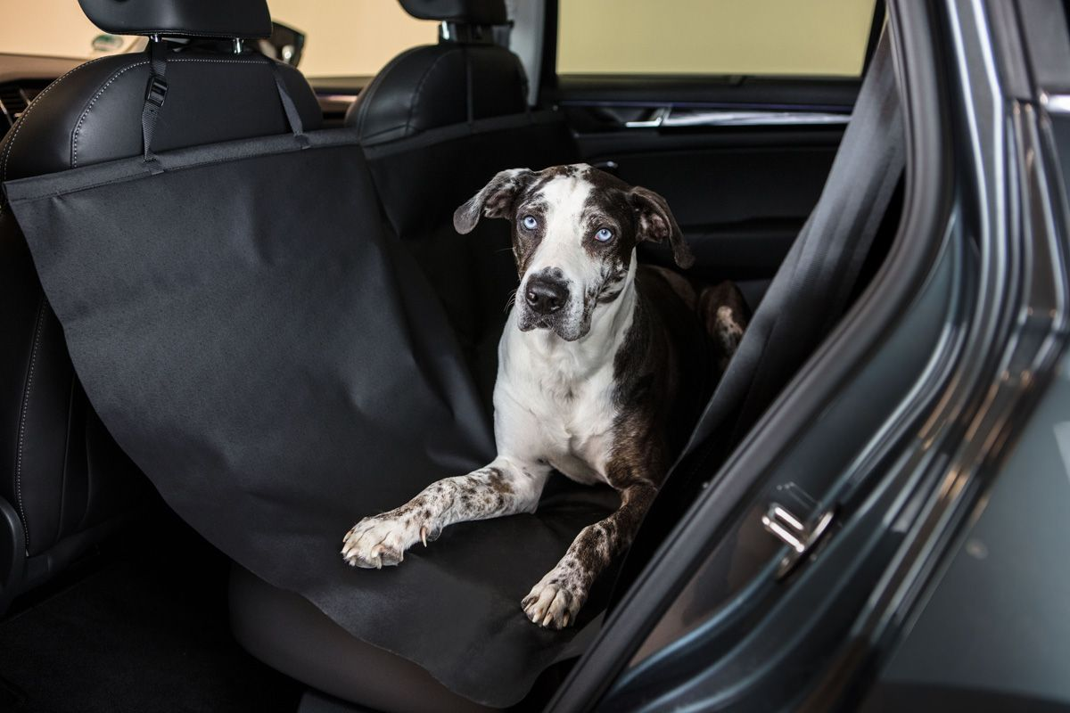 Állatok az autóban