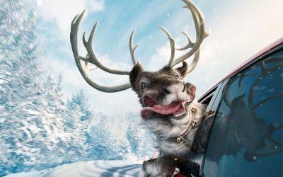 SKODA Reindeer 1920x1920 Uncropped